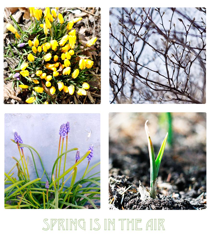 spring_blog
